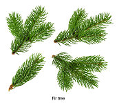 Fir tree branches isolated on white without shadow Set