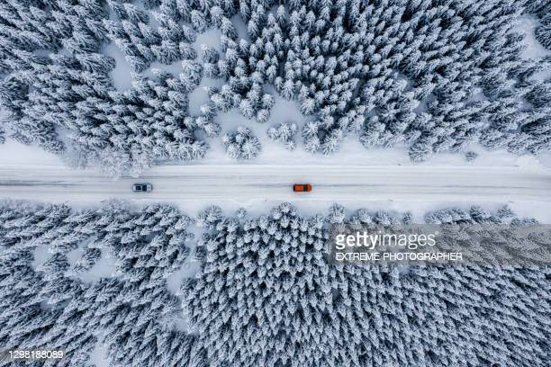 fir tree forest and a road covered with snow seen from a drone perspective - helicopter stock pictures, royalty-free photos & images