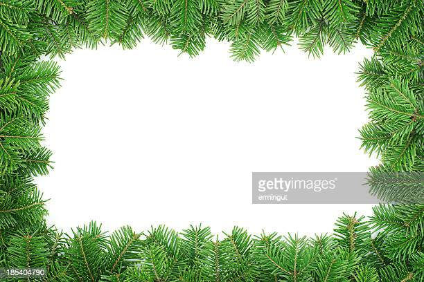 fir tree frame  isolated on white background - twijg stockfoto's en -beelden