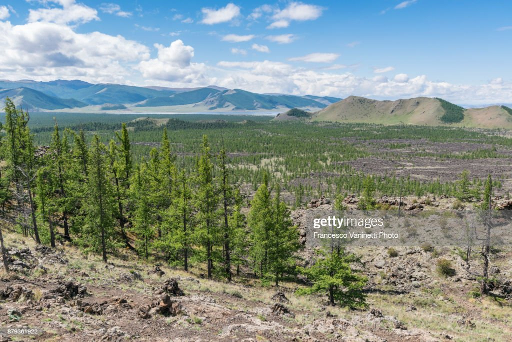 fir-trees-and-volcanic-terrain-in-white-