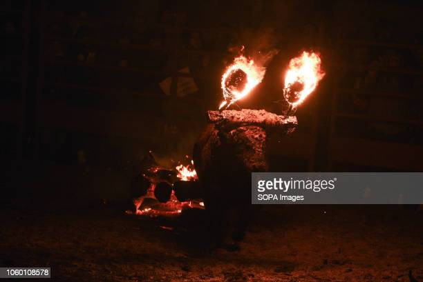 A fire bull stands on the arena during the 'Toro de Jubilo' Fire Bull Festival in Medinaceli 'Toro de Jubilo' is an ancient tradition from the bronze...