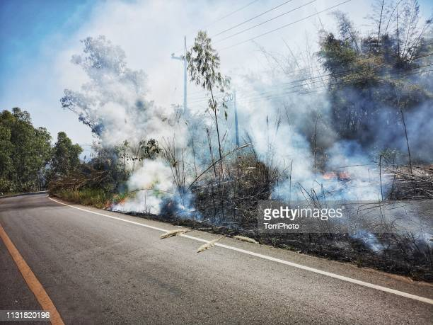 fire burning in a field on a roadside - exotic_species stock pictures, royalty-free photos & images