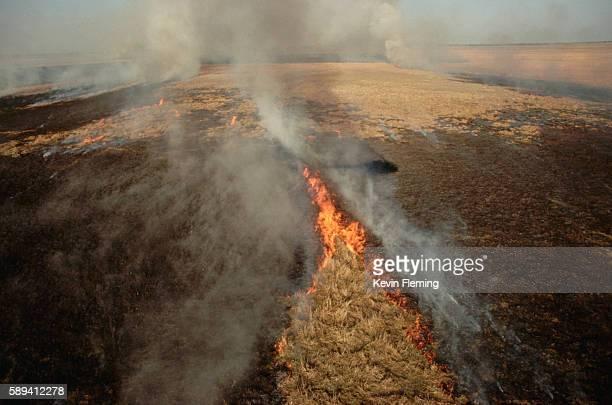 fire burning in the everglades - 低湿地 ストックフォトと画像