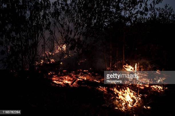A fire burns down trees in the Amazon rainforest in Porto Velho Rondonia state Brazil on Saturday Aug 24 2019 The world's largest rainforest Brazil's...