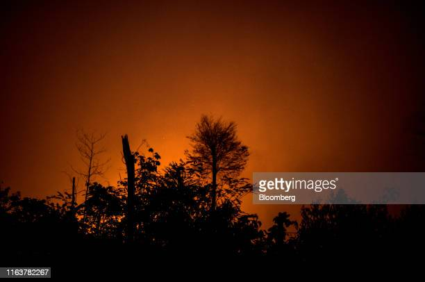 Fire burns in the Amazon rainforest in Porto Velho Rondonia state Brazil on Saturday Aug 24 2019 The world's largest rainforest Brazil's Amazon is...