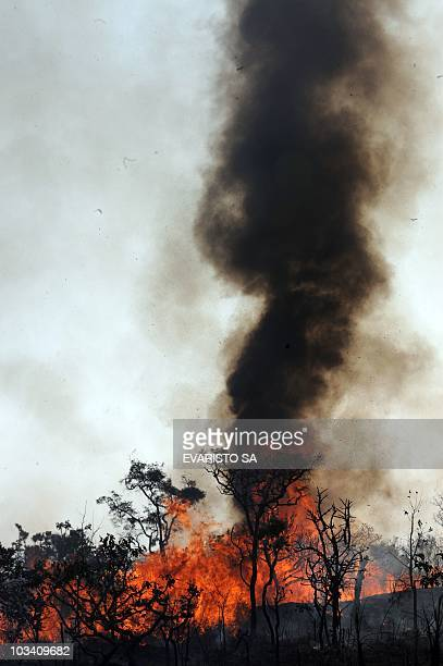 A fire burns in the bush around Sobradinho 35 km from Brasilia on August 16 2010 Some 12000 fires are burning in Brazil on Monday with the northern...