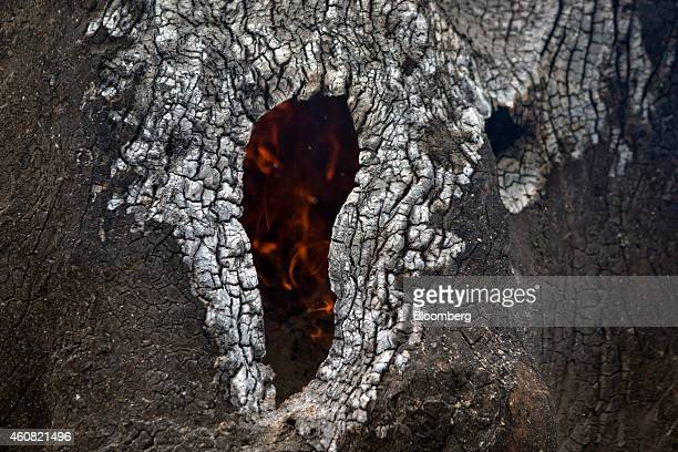 Fire burns in the trunk of a brazil nut tree in the southern part of the Amazonian state of Para near Anapu Brazil on Sunday Dec 14 2014 The rate of...