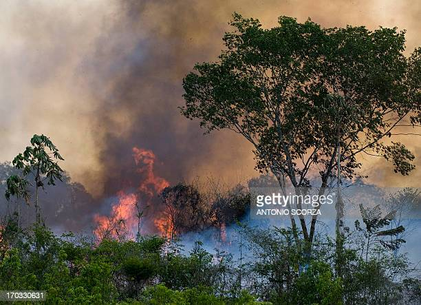 A fire burns part of the 500 thousand hectares of the Tapajos National forest on route BR163 between Santarem and Cuiaba northern Brazil on December...