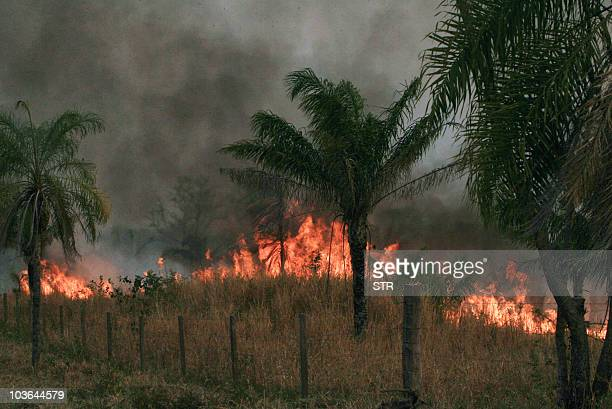 Fire burns pasturelands in Guarayo, Santa Cruz department, Bolivia on August 25, 2010. Two million hectares in three Bolivian departments bordering...