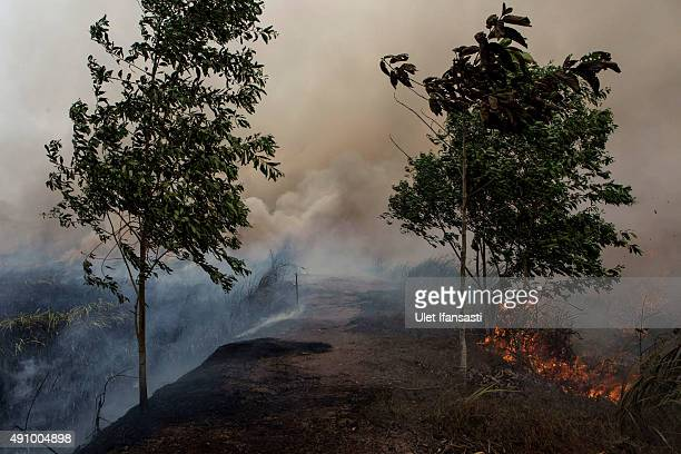Fire burns peatland and fields at Sungai Rambutan village Ogan Ilir district on October 2 2015 in Palembang South Sumatra Indonesia The air pollution...