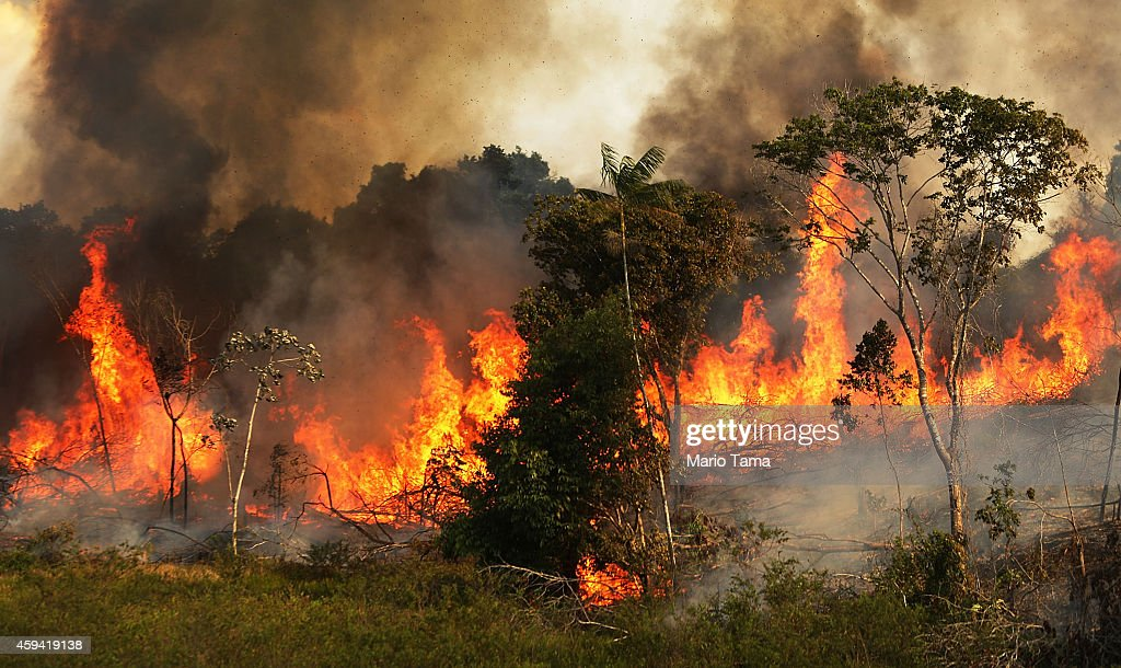 Deforestation In Brazil's Amazon Skyrockets After Years Of Decline : News Photo