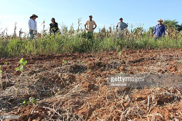 fire clearing of the great land owners destroyed the cornfilds of the small farmes nearby