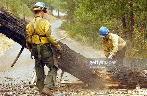 Fire crews remove a fallen tree that blocks a road after a controlled burn to make a fire line in the Siskiyou National Forest August 3, 2002 outside...