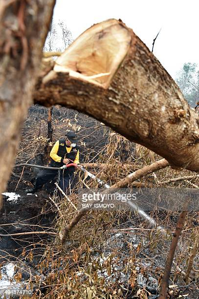 A fire fighter tries to put out fires in forest and peatlands surrounding Palangkaraya city in Central Kalimantan on October 30 2015 Desperate...
