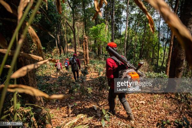 Fire Fighters from Doi Mae Salong Station walk deep into the jungle to put out a forest fire on April 20 2019 in Chiang Rai Thailand Thailand's...