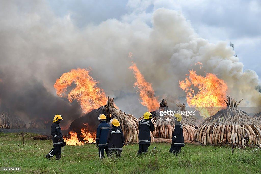 Kenya Nairobi Ivory Burning : News Photo