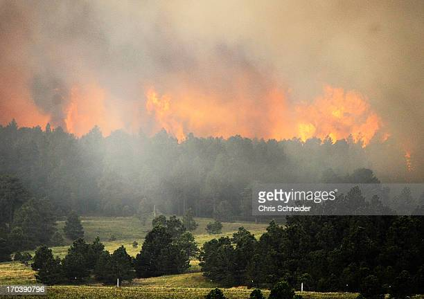 Fire from the Black Forest Fire burns behind a stand of trees June 12 2013 near Colorado Springs Colorado The fire has reportedly burned 80 to 100...