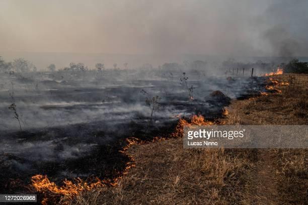 fire in brazilian savannah (cerrado) - pantanal wetlands stock pictures, royalty-free photos & images