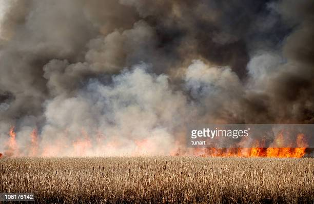 Feuer in Dry Marsh