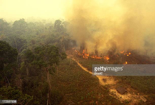 fire in the amazon - fire natural phenomenon stock pictures, royalty-free photos & images