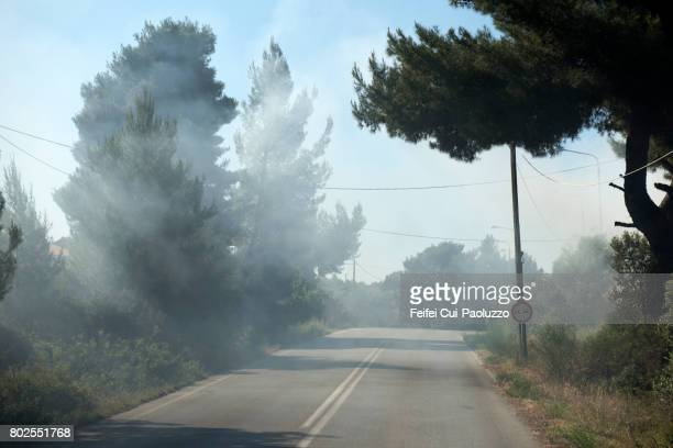 a fire in the forest near porto carras, sithonia, chalkidiki peninsula in macedonia region, northern greece. - 待避所標識 ストックフォトと画像