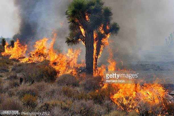 Fire motors along the desert floor, A total of about 5 acres burned and was started by a dry lightning strike