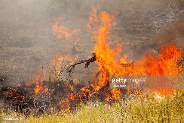 fire on the plain - controlled field burn