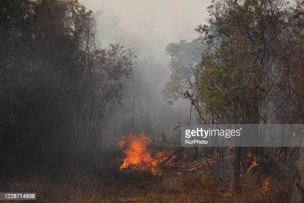 Fire outbreak in the city of Barao de Melgaco, in Mato Grosso, Brazil, on September 25, 2020. The wind, the heat, the low humidity, the lack of rain...