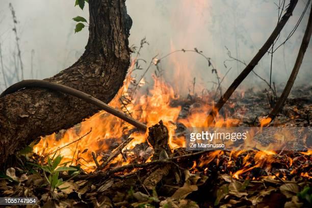 fire - waldbrand stock-fotos und bilder