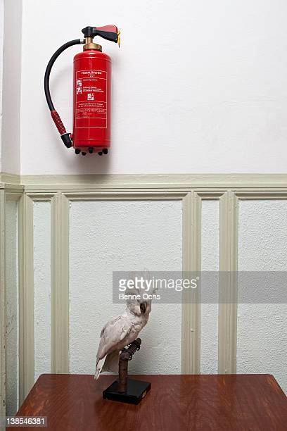 Fire preparations with stuffed parrot and extinguisher
