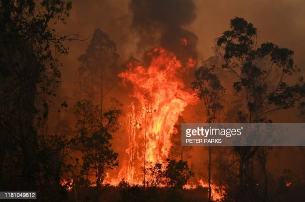 TOPSHOT A fire rages in Bobin 350km north of Sydney on November 9 as firefighters try to contain dozens of outofcontrol blazes that are raging in the...
