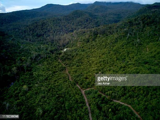 Fire roads used by loggers and miners are seen in a forest on October 18 2019 in Narra Palawan Philippines With 178 land and environmental defenders...