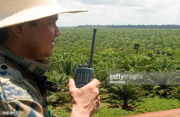 Fire watcher Denilson Lima looks over a crop of palm oil trees at the Agropalma Group facility in Tailandia Para Brazil on Monday March 27 2006...