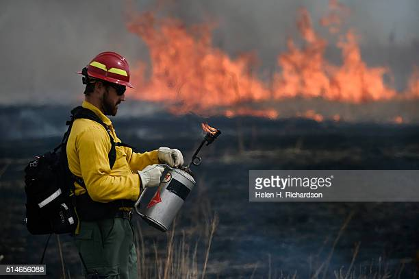 Firefighter Andrew Joyce adjusts the flame on his drip torch that he uses to ignite common Mullen an invasive species Horsetail and other grasses as...