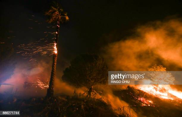 A firefighter battles a wildfire as it burns along a hillside near homes in Santa Paula California on December 5 2017 Fastmoving windfueled brush...