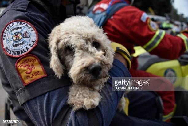 A firefighter carries a dog found in the ashcovered village of San Miguel Los Lotes in Escuintla Department about 35 km southwest of Guatemala City...