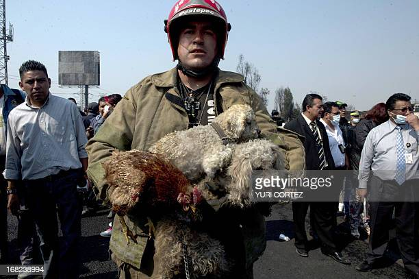 A firefighter carries puppies and a hen rescued from a house destroyed by the blast caused by a gas tanker that blew up in Ecatepec north of Mexico...