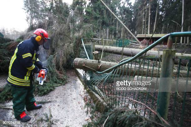 A firefighter cuts a tree after it fell on a fence of the zoological garden of Gera eastern Germany during a heavy storm on January 19 2018 Two more...