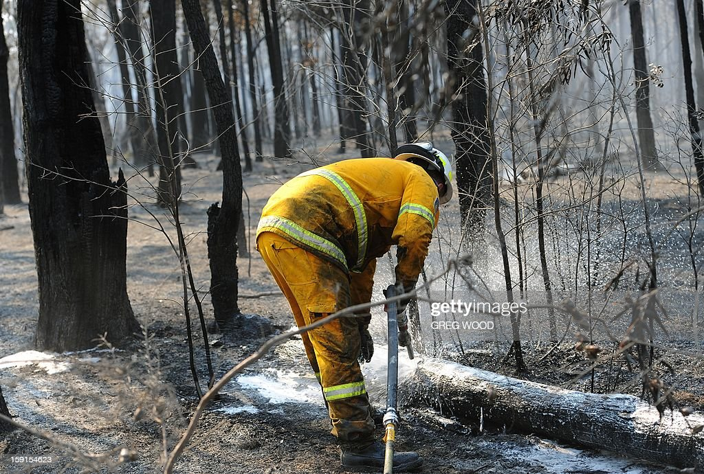 A firefighter douses burning logs from the Deans Gap fire near Nowra on the south coast of Australia's New South Wales state on January 9, 2013. Cooler conditions helped firefighters battling blazes across Australia on January 9 but up to 30 were still out of control. AFP PHOTO / Greg WOOD