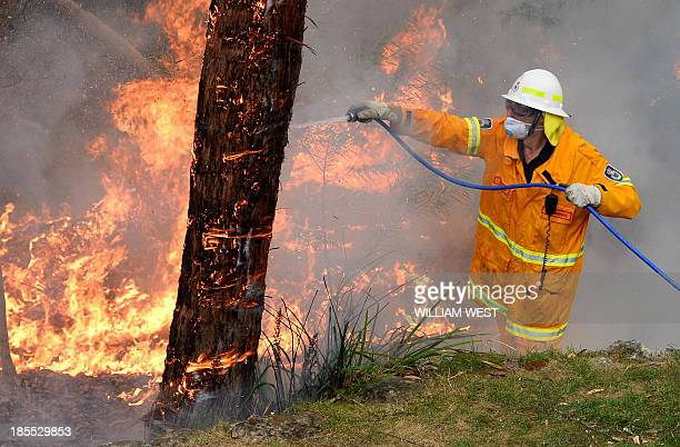 A firefighter hoses a tree as they work to contain fires from a resident's backyard at Faulconbridge in the Blue Mountains on October 22 2013...