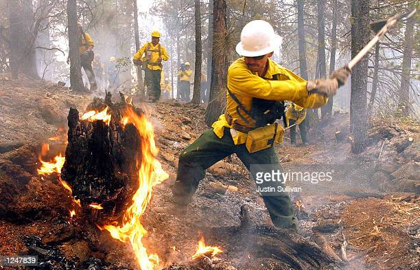 Firefighter Jose Martinez from Ontario Oregon puts out a hot spot from a controlled burn to make a fire line in the Siskiyou National Forest August...