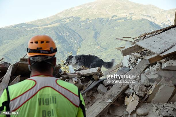 Firefighter looks at a dog searching for victims in the rubble and debris in the damaged central Italian village of Amatrice on August 27 three days...