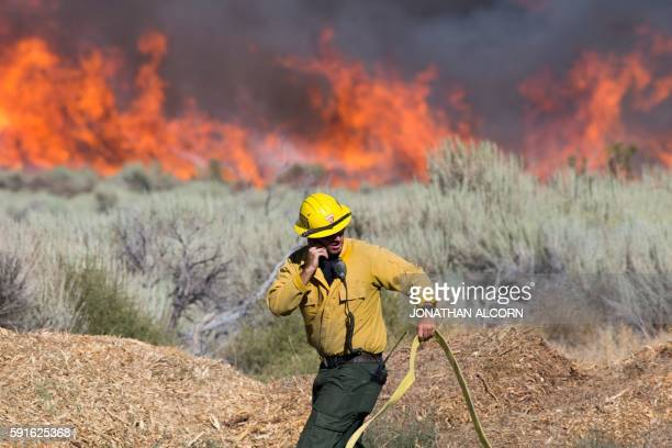 A firefighter maneuvers a hose at the Blue Cut wildfire in Wrightwood California on August 17 2016 A rapidly spreading fire raging east of Los...