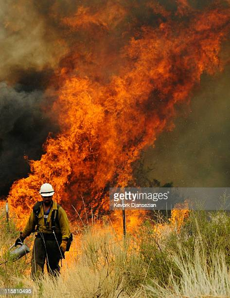 A firefighter walks away after setting a backburn on Highway 191 in an attempt to control a raging wildfire on June 10 2011 in Nutrioso Arizona The...