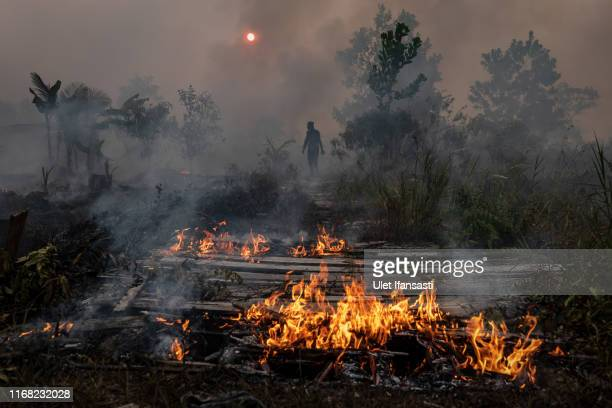 Firefighter walks through smog as try to extinguish the fire on burned peatland and fields on September 14, 2019 in Palangkaraya, Central Kalimantan,...