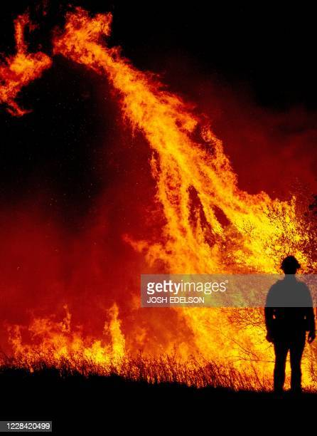 Firefighter watches flames ignite a tree as fire continues to spread at the Bear fire in Oroville, California on September 9, 2020. - Dangerous dry...