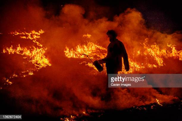 firefighter with a drip torch walks through a wildfire in australia - forest fire stock pictures, royalty-free photos & images