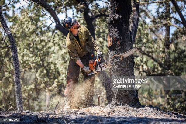 A firefighter with the Elk Mountain Hotshots cuts down a tree destroyed in the Clayton Fire in Lower Lake California August 16 2016 A man was...