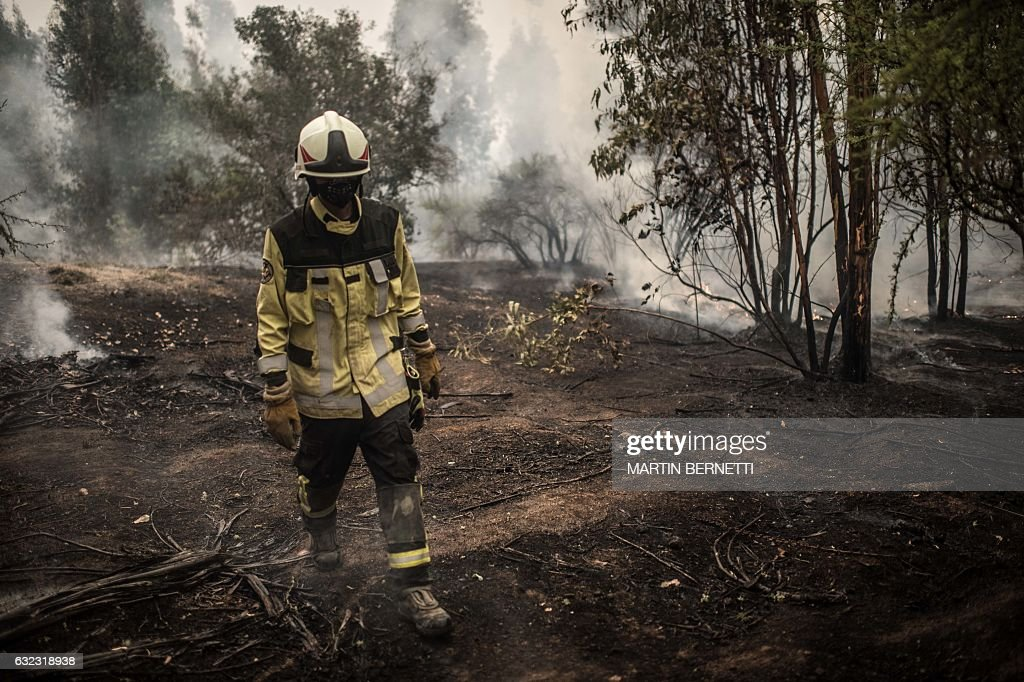 A firefighter works to put out a forest fire in Pumanque, 140 km south of Santiago on January 21, 2017. The Chilean government declared a state of emergency in several central areas due to forest fires that have destroyed more than 35,000 hectares of woods so far. / AFP / MARTIN