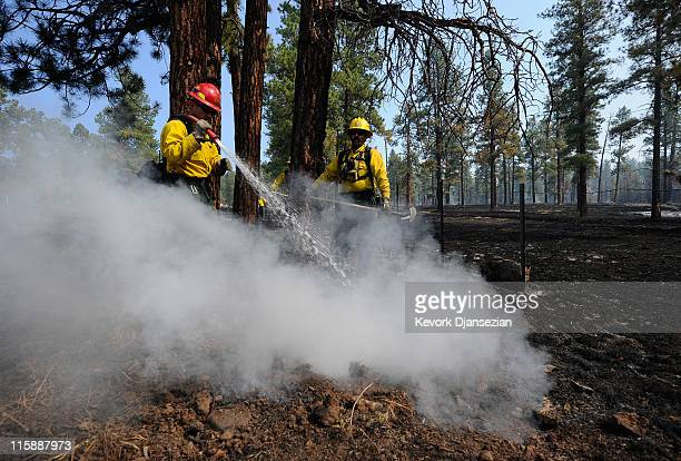 Firefighters Cpt Jimmy Neisen and Tarcy Wright from Surprise Arizona work to put out a hot spot in a tree trunk on June 11 2011 in Greer Arizona A...